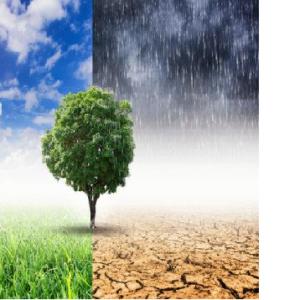 پیشینه تحقیق اثرات زیست محیطی | مطالعات علمی و پژوهشی و ISI